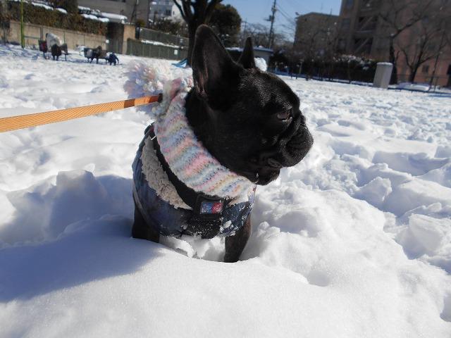 180122~23大雪⑯