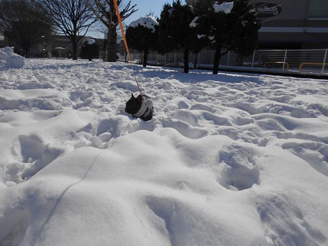 180122~23大雪⑳1
