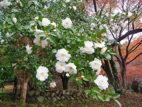 miseyakata (2)