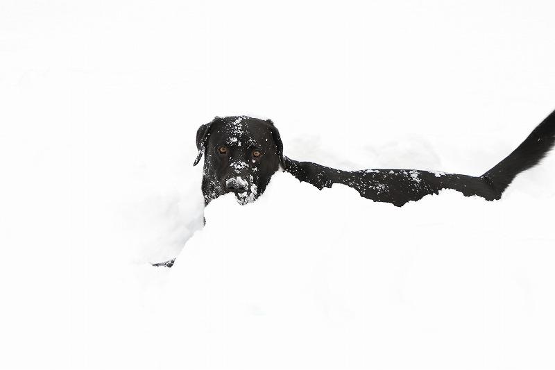 雪の中マル