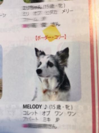 2017-12-28-1 長寿犬