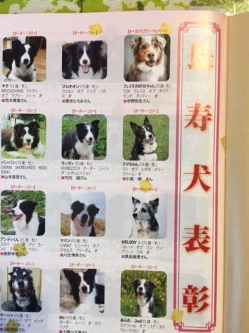 2017-12-28-2 長寿犬