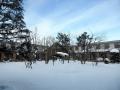 年末年始でこーんもり、雪が積もりました~