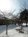 先週までの大寒波が嘘のような春の陽気