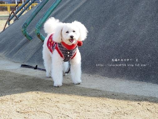 師走の公園2