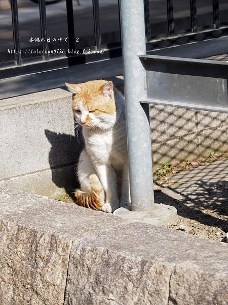 午後の猫さん