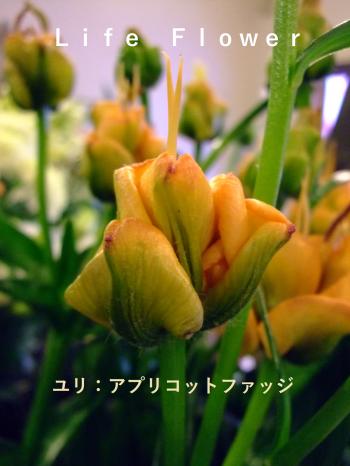 繧「繝励Μ繧ウ繝・ヨ_convert_20180113155135