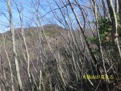 大岳山が樹間から見える