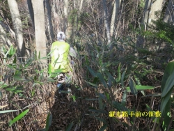 儒走路に出る手前の笹薮