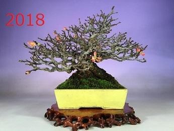 長寿梅160111-2