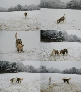04-0117-雪の日ベルちゃんと公園で