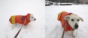 2014-0214-雪の日に公園で