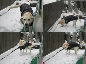 2014-0214-雪の日に庭で遊ぶ