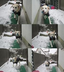 2014-0214-雪の日に庭で遊ぶ-散歩後