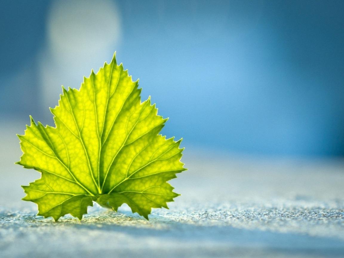beautiful-leaf.jpg