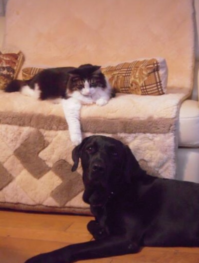 ハリーと猫と。