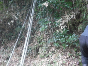 180130竹を伐り出す