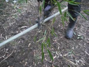 180130鉈鎌で枝を落とす