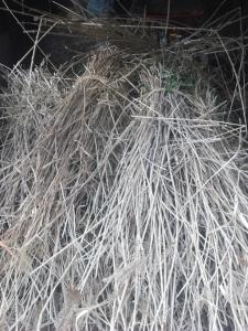 180225刈った萱の一部