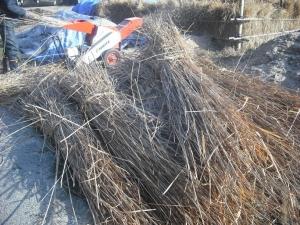 180227萱をNO2堆肥場で砕く