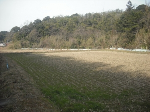 180227第1圃場から見た景色