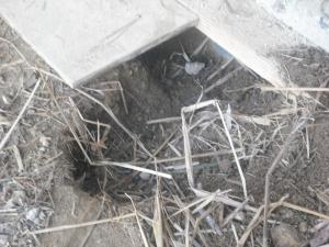 180227サブが掘った穴