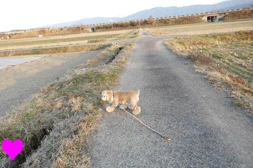 お散歩には田んぼ道がいい