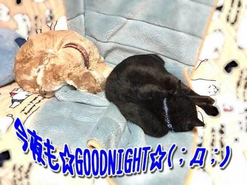 おやすみなさいでし