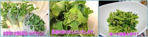 菜花のおひたし
