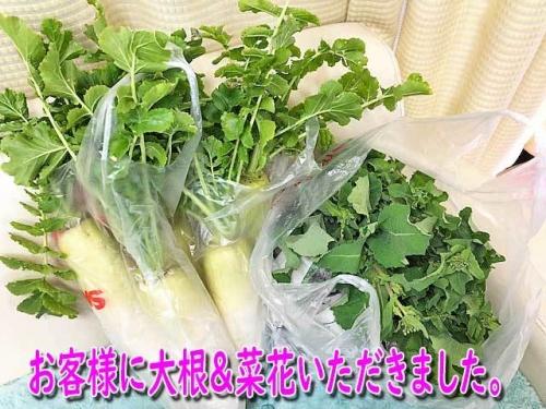 大根と菜花