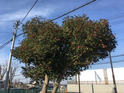 tree400_20180214053451a5c.jpg