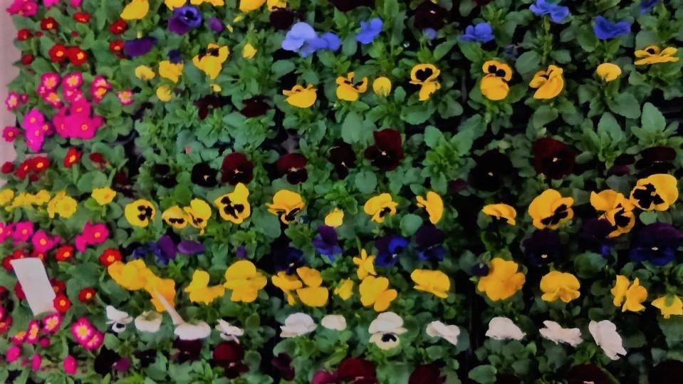 0127花