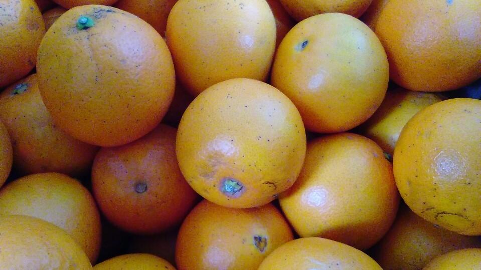 0217オレンジ
