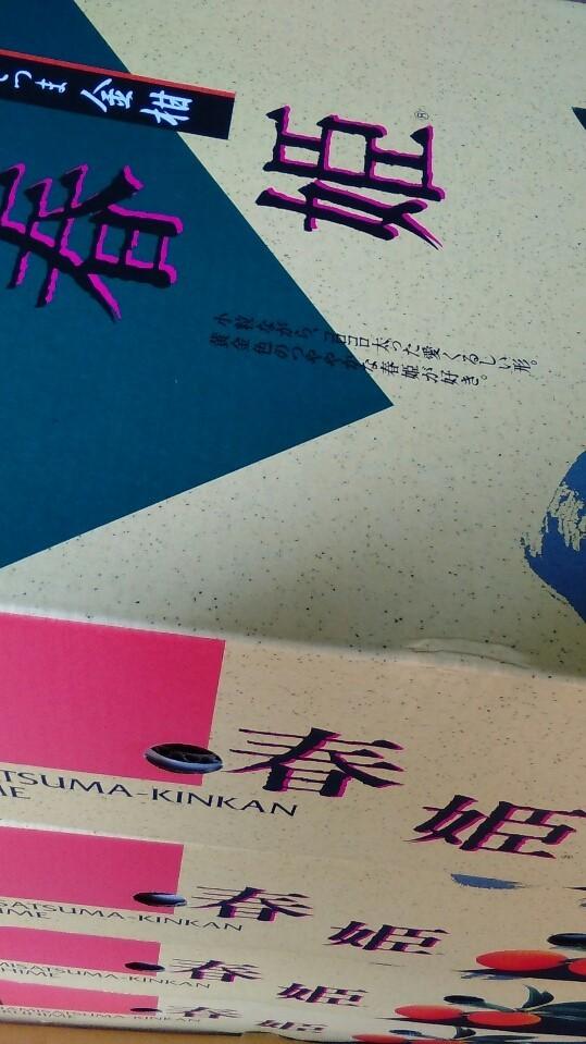 0223金柑-1