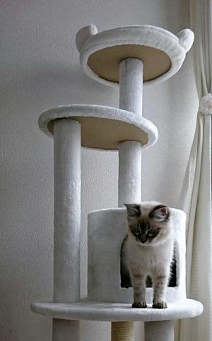 ジュジュキャットタワー