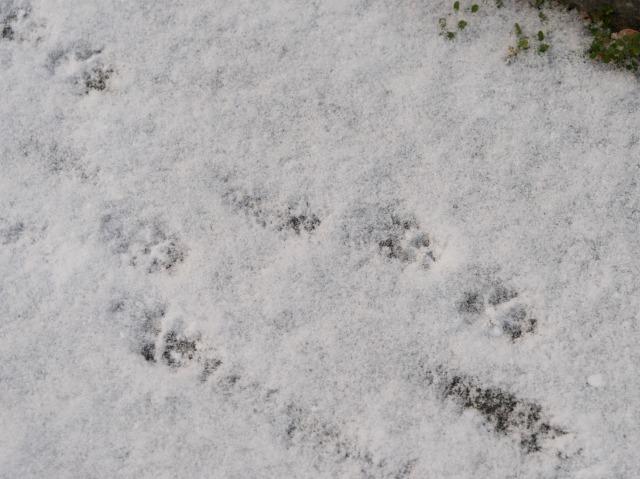 雪の朝-5