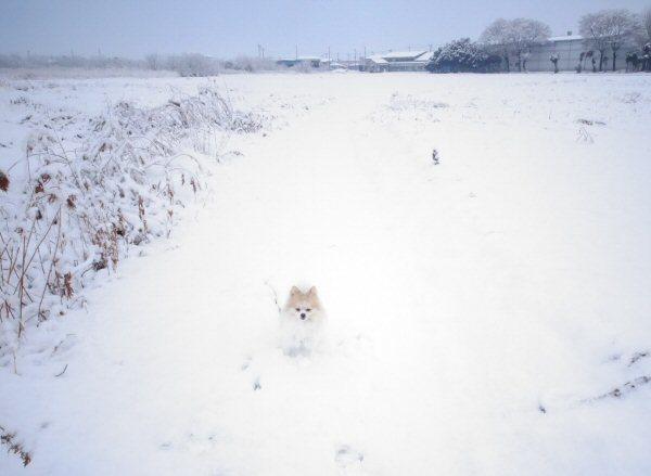 2月2日5cmの積雪