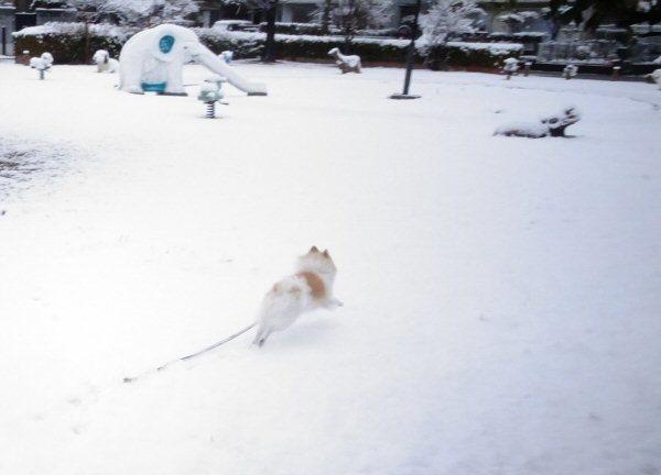 公園で雪遊び