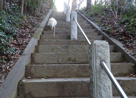 最後の階段s