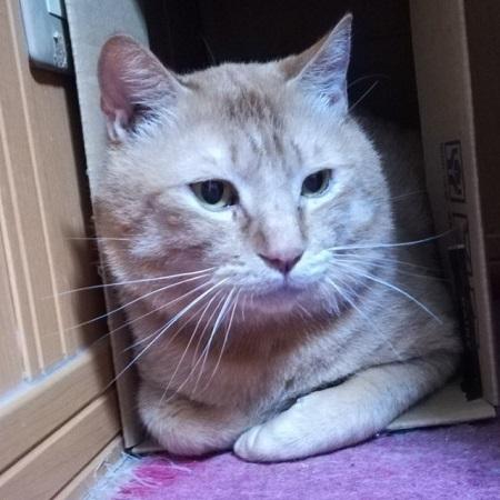 2018-02-14-茨城猫-02こう煌オス1-2歳