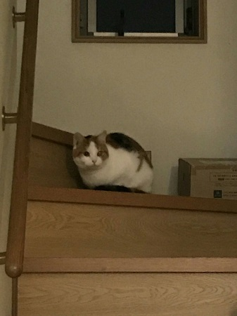 先住猫ハナ