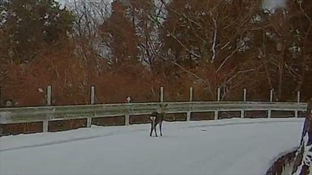 英彦山で鹿に遭遇!