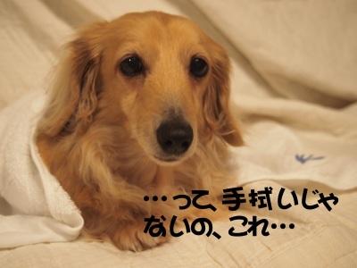 写真4664(№453)1