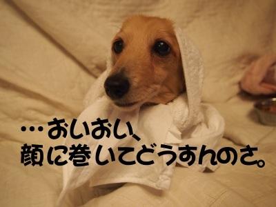 写真4667(№453)1