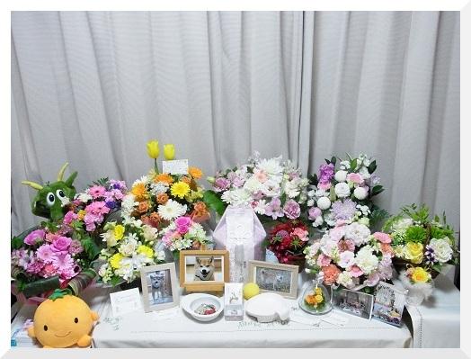 お花がいっぱい・・・