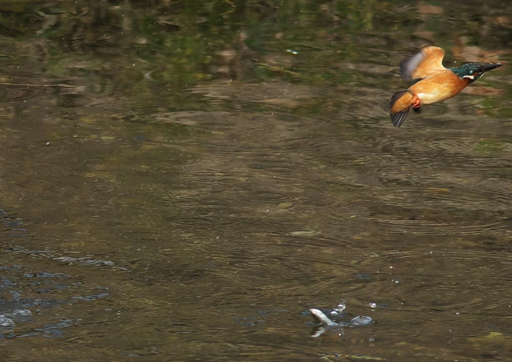 魚を落とす (6)
