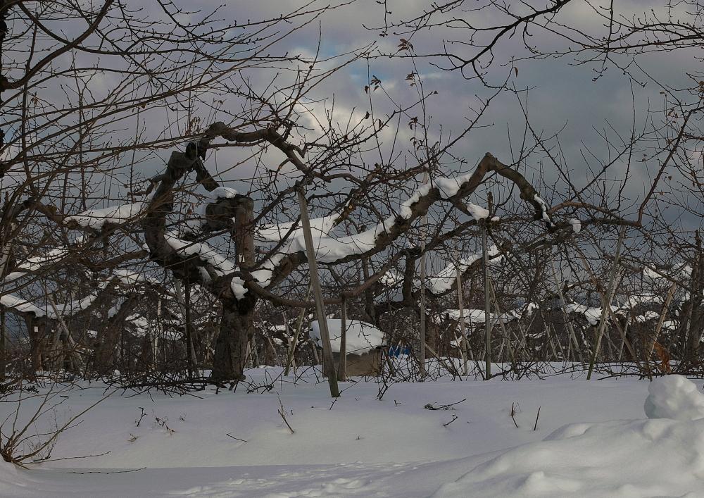 雪国 (2)