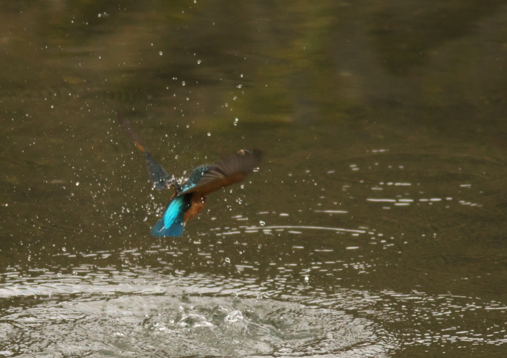 大きな魚 (4)