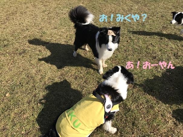 IMG_7064_201711282038092ff.jpg