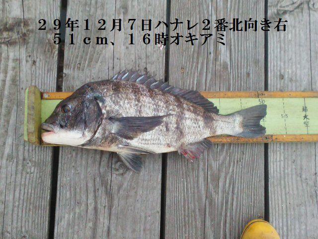 釣果291207、51cm
